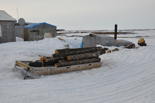Wood harvest for winter stove and steam
